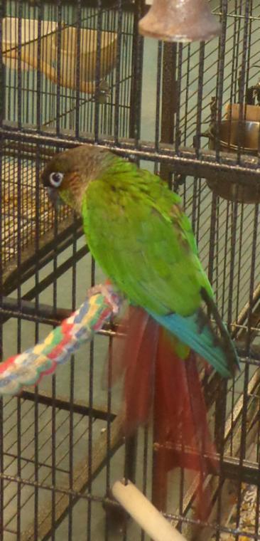Sanctuary-Birds
